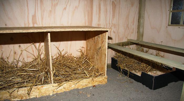 Bygge hønsehus