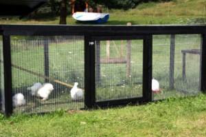 hønsegård modul